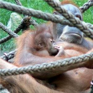 Visit the Zoo Babies