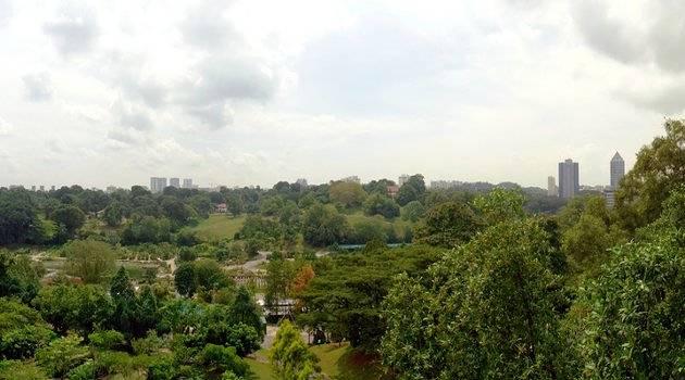 Kent Ridge Park Canopy View