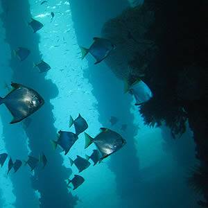 Top World Sights – Underwater!