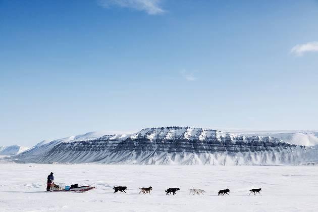 Dog-sledding over snowy terrain