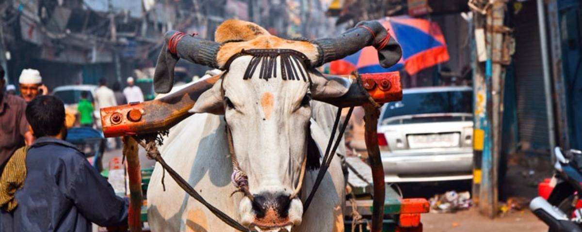 6nt-india-tour-of-delhi-agra-and-jaipur-inc-4-ho